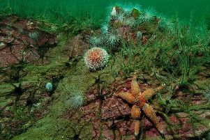 Urchins and brittle stars  Picture credit: Paul Naylor