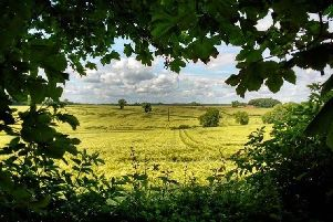 This summery shot of Teversall was taken by Instagram user @ayup_me_duck. Tag us at @chadnews to feature