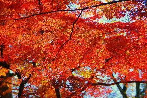 Autumnal temperatures are on their way.
