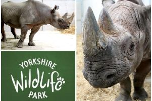 New rhinos Jasper and Makibo are starting to settle in