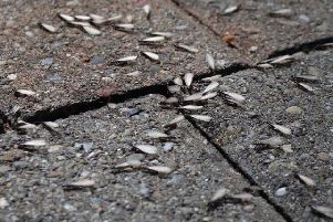 Flying ants can cover surfaces.