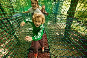 Days Out: Tree Top Nets, Ripon