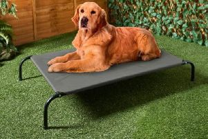 This dog sun lounger is being sold by B&M (Photo: B&M)