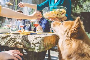 Did you know that some staple barbecue treats may actually pose a danger to your dog?