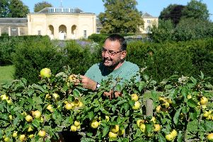 Kitchen gardener Mark Westmoreland and his team grow 10 varieties of apple at Nostell Priory