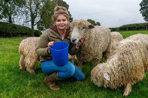 Young farmer and veterinary nurse Hannah Chapman, of Ripon, who looks after her flock of Lincoln Longwool sheep