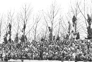 Branching out: Spectators watching the North defeat the All Blacks in 1979.