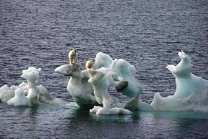 Polar bears on melting ice caps