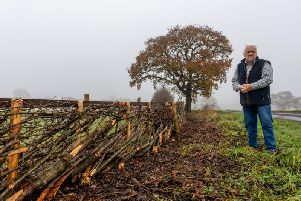 Ken Walmsley, of The Old Stables, Risplith, near Ripon, North Yorkshire, a former farmer and builder and also a professional hedgelayer, pictured looking at a Thorn Hedge built in Yorkshire Style. Credit: James Hardisty