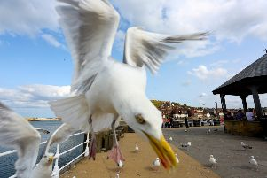 A woman is interrupted from eating fish and chips by a greedy flock of seagulls. Picture: SWNS