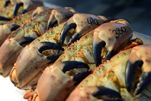 Generic picture of crabs.