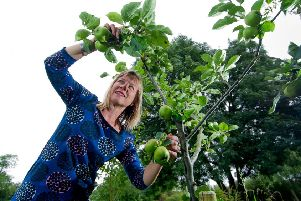 Committee member Anna Airaksinen checking the condition of the apples in the orchard. PIC: James Hardisty