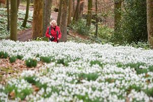 Experts have said that snowdrops, the blooms that signal the end of winter is coming, have arrived around a week early this year. Ben Birchall/PA Wire