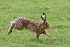 What more should be done to stop hare coursing?