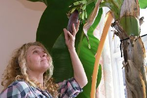 Wendy Milner inspects the plant which has grown to 13ft tall.