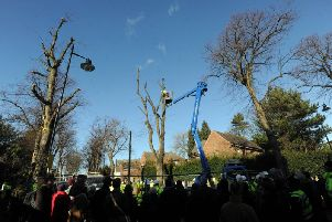 Tree felling in Sheffield has been the cause of controversy for several years.