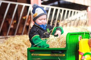 William Pearson from Bradford is only three-year-old but he is proving a dab hand on the family farm - as well as a star of social media. Picture by Helen Cussons.