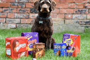 Boseley was caught scoffing SEVEN Easter eggs and rushed to the vets. Photo: SWNS