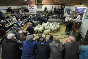 Stephen Dennis chief auctioneer at Bentham Auction Mart taking charge of the spring lamb sale.