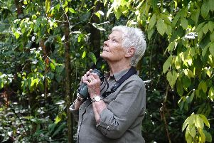 Dame Judi Dench in the rainforest: PA Photo/ITV/Atlantic Productions.