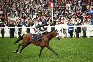 Dashing Willoughby - pictured winning at Royal Ascot under Oisin Murphy - could reappear at Goodwood.