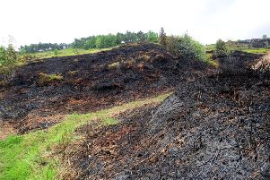 The burnt moorland at Ilkley Moor after the fire.