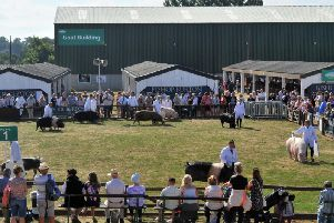 Pig classes at the Show in 2018