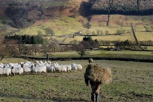 The Department for Environment, Food and Rural Affairs has today announced that the second round of its Countryside Productivity Small Grants scheme is now open for applications. Picture by Gary Longbottom.