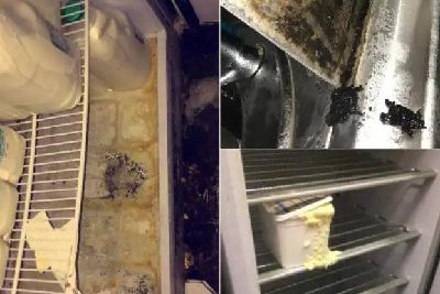 Shocked inspectors found MOUSE and fruit fly infestation at