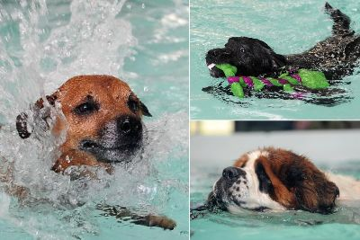 Brighouse dog care centre and pool plan given the go-ahead