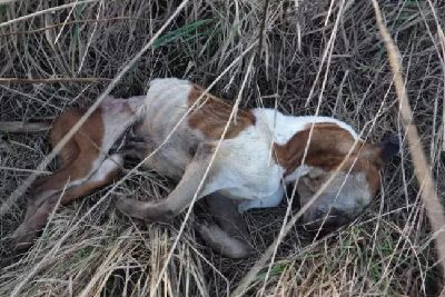 Heartbreaking: Dog starved to death and dumped on Morley footpath