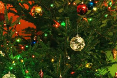 Where To Recycle Your Christmas Tree In Leeds Yorkshire Evening Post