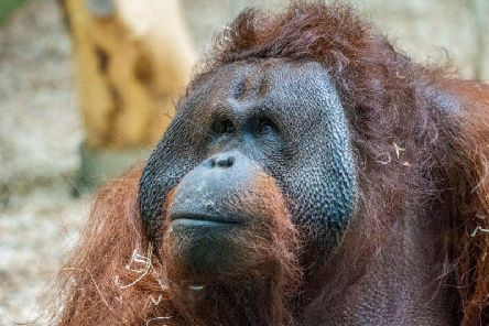 Ramon - picture by Blackpool Zoo