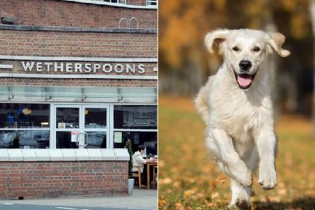 Wetherspoons are banning dogs from all of their pubs