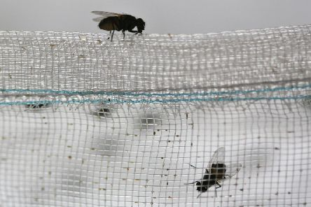Fly infestation complaints increased by 120%