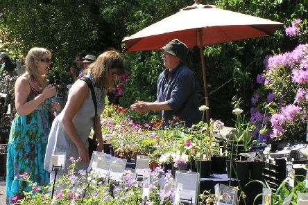 Derbyshire Plant Hunters' Fair at Carsington Water.