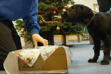 Wrapping goodies for an excited little doggy
