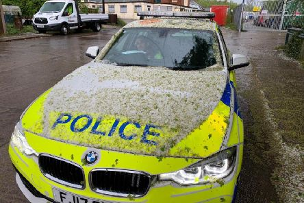 """Meanwhile PC Terry had his own plant matter issues."""