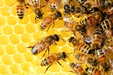 A person dialled 999 about bees in their flat.