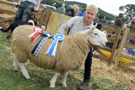 Hope Show.'Jack Webster with his prize winning North Country Cheviot.