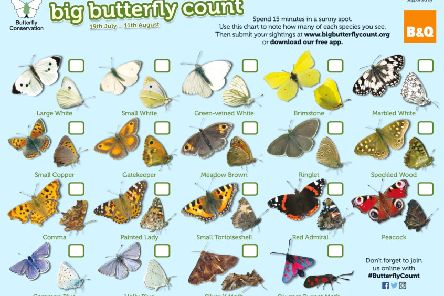 The Big Butterfly Count 2019 ID chart.