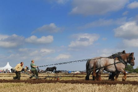 Horse ploughing classes at Festival of the Plough in 2015