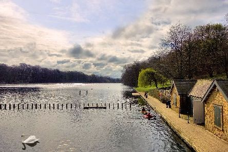 Wild swimmers invited to take a dip in Roundhay Park's lake
