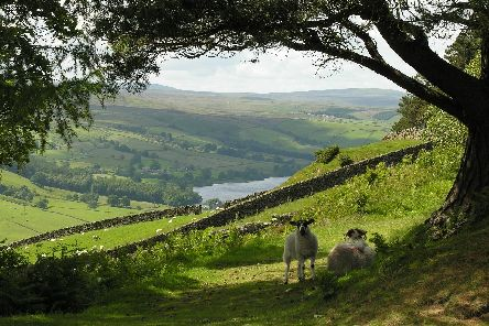 A blueprint for how the Nidderdale AONB could be managed in the years to come will be put to the public