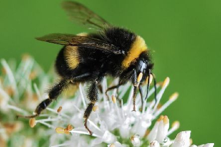 How you can help to save the bees