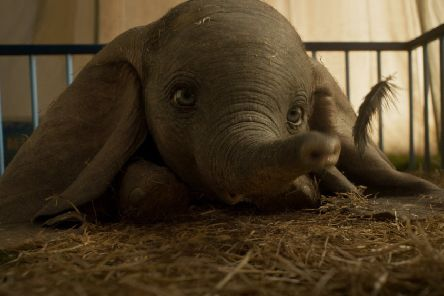 Disney's all-new, live-action feature film Dumbo.