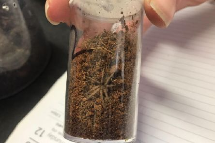 Brazilian bird-eating tarantulas were dumped in a car park in Derbyshire last year.