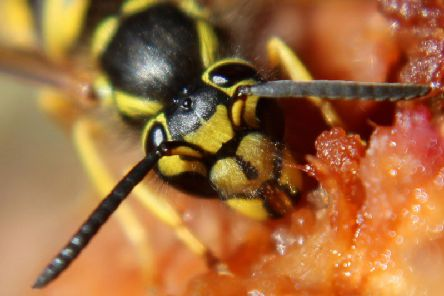 Wasps could pose a danger this summer. Photo: Amelia Martin.