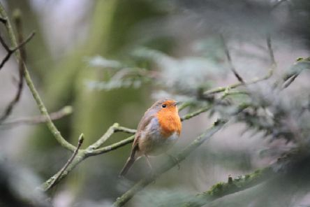 Readers are asked to join in the Big Garden Birdwatch  Picture: Matthew Armett