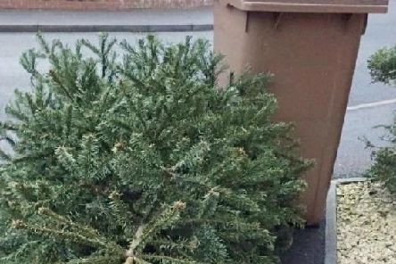 Green waste collections stop in South Ribble over Christmas